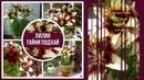 Комнатная лилия выращивание лилии в доме