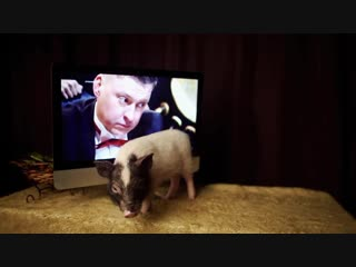 Семья Гридиных: Владислав, Алла, дочки Альбина, Вероника, Агата, собака Амели, свинка Хрюня, г. Можайск