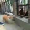 Mirsamad_ video