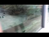 Зоопарк в Екб