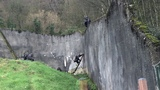 Chimps escape from Belfast Zoo
