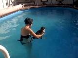 Кота искупали в бассейне ГАДЫ!!!_cat meets water