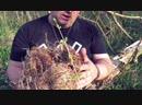Moko Wiesel - Gnijezda u Našoj Okolici