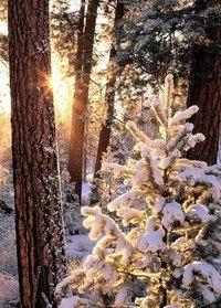 Зима... Морозная и снежная, для кого-то долгожданная, а кем-то не очень любимая, но бесспорно – прекрасная.  ByYa4VVjtJk