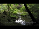 The Gardens of Kyoto. Part 2 2