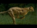Animals are Awesome Compilation 2013 Part 2 HD