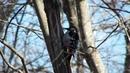 Сафари-парк находится в лесу. Здесь можно увидеть лесных птиц.