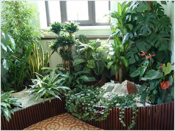 6 советов для комнатных растений .