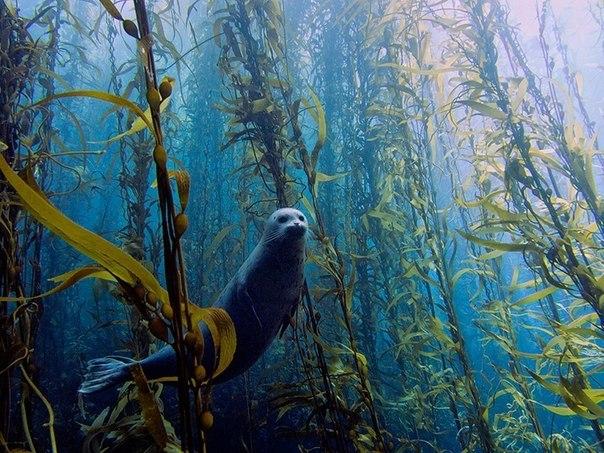 Потрясающий подводный лес!