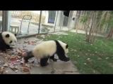 Работа с пандами Она просто пытается делать свою работу