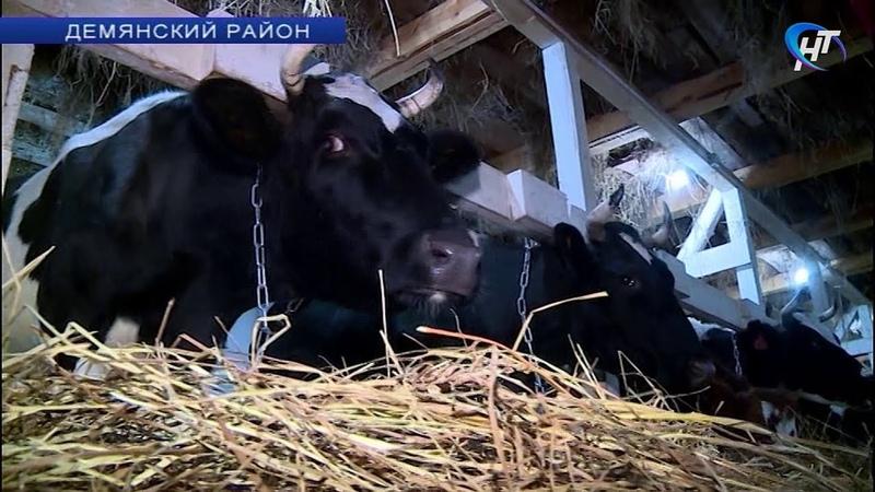 В деревне Пестово Демянского района открылась ферма в крестьянском хозяйстве семьи из Омска