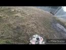 Czechoslovakian wolfdog (Чехословацкий влчак; волкособ)