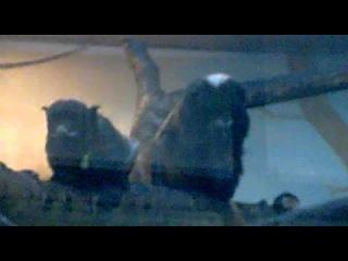 Смешные сурки и обезьяны. Funny marmots and monkeys.