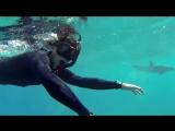 Плавание С Дельфинами! Невероятно!