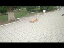Парк собак осеннее утро