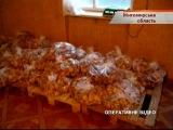 Страница 2. Житомирские пряники изготавливают в антисанитарных условиях - «Надзвичайні новини»: оперативна кримінальна хроніка, ДТП, вбивства