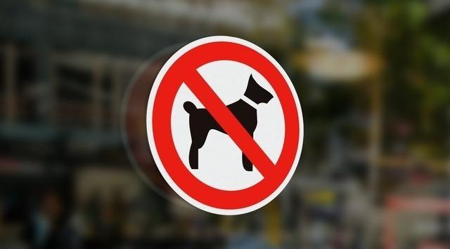 А Вы поддерживаете запрет на посещение с собаками в некоторых магазинах?