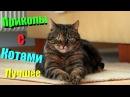 Приколы с Котами всё Самое Лучшее. Смешные коты и кошки ТОПовая Подборка. Funny Cats Co...