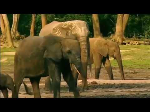 Животные дикой Африки Красота Центральной части континента Самое необычное место нашей планеты Земля