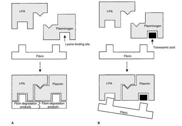 Механизм действия апротинина