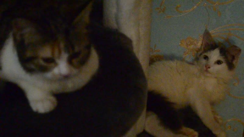 Мила, Алик и Киса.