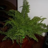 Кімнатні рослини вазони обмін та