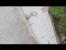 Плоские камни В Устье Кубенском районе у Бени Играева ВидеоМИГ