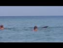 Дельфины играют на пляже с людьми