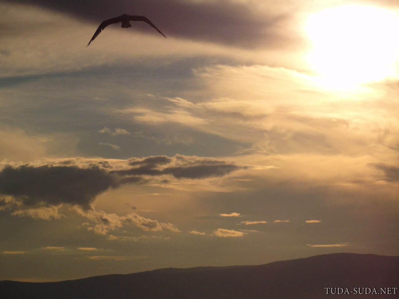 Чайка закат