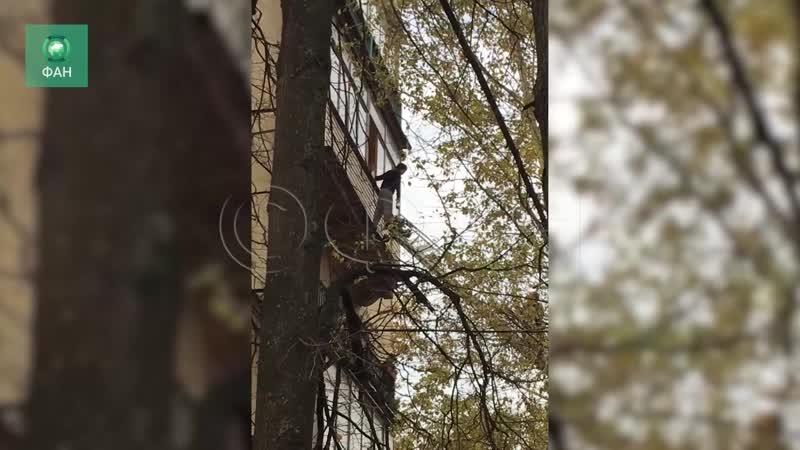Женщина-«паук» сбежала от спасателей по стене дома в Петербурге