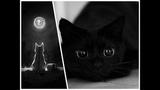 Black Cat Funny - Black Cat Spring