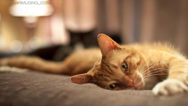 Прикольные истории о котах - Страница 4 Bu4Oauj1MyY