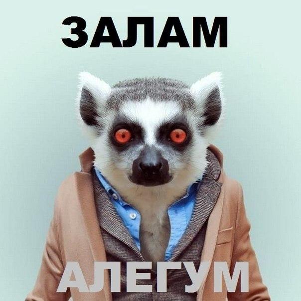 Мой ник тут к месту)