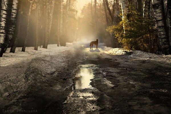 Лесная дорога, Россия