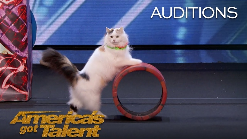 The Savitsky Cats Super Trained Cats Perform Exciting Routine - Americas Got Talent 2018