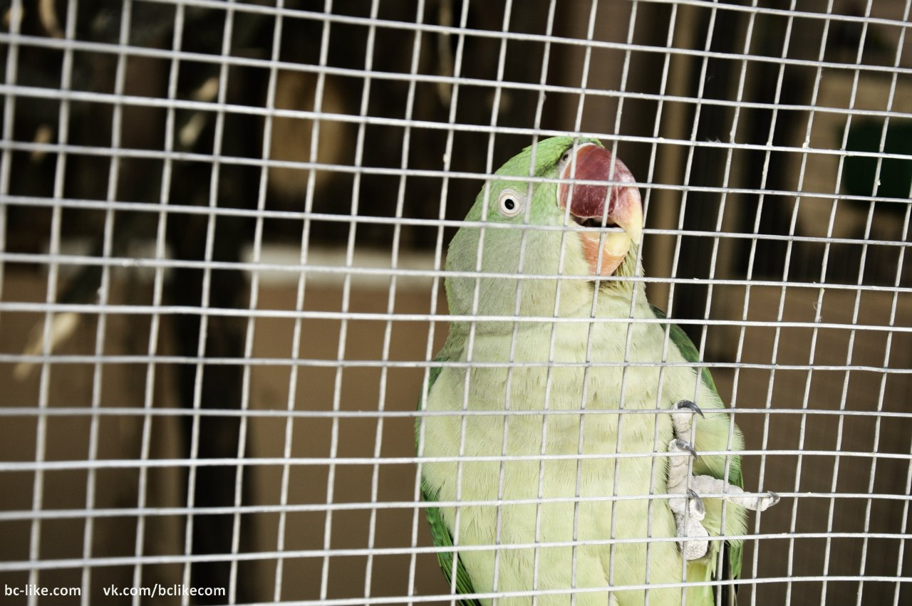 Парк Олександрія: Зоопарк в Білій Церкві - Екзосвіт Золотий Фазан