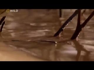 Речные монстры Амазонка Большие рыбы Документальный фильм