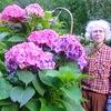 Гортензии в дизайне сада, виды и сорта гортензий