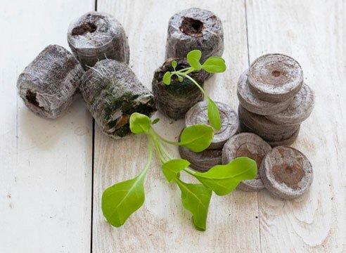 петуния: выращивание в торфяных таблетках если вам плохо удается выращивание рассады петунии традиционным способом, посейте ее в торфяные таблетки дражированными семенами. торфяные таблетки
