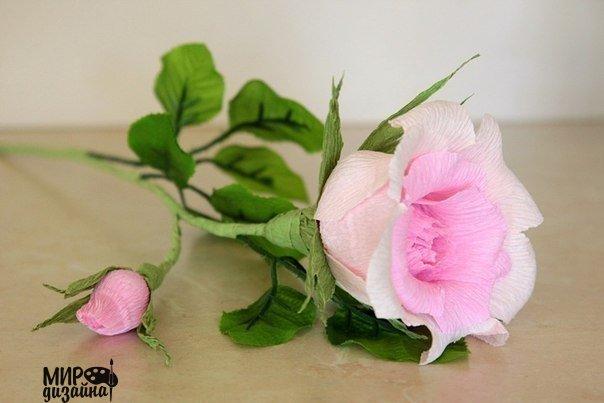 Роза из гофробумаги. (9 фото)