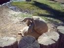 Орное совокупление черепашек