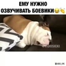 """Самые эпичные видео рунета! 😂 on Instagram: """"Ему бы боевики озвучивать 😂😃🐶"""""""