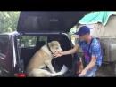 Как научить собаку прыгать в багажник Алабай один из способов