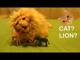 Шапка Лев для кота (Львиная грива для кошки) 0