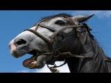 Лошади производят звуки губами