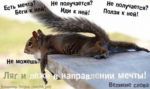 http://cs407025.userapi.com/v407025539/3a95/ceh5ONLC5G4.jpg
