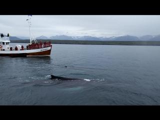 Исландия, Акюрейри