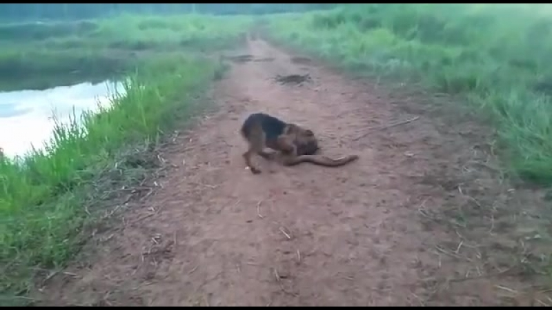 DOG BITES ELECTRIC EEL AND PAYS THE PRICE