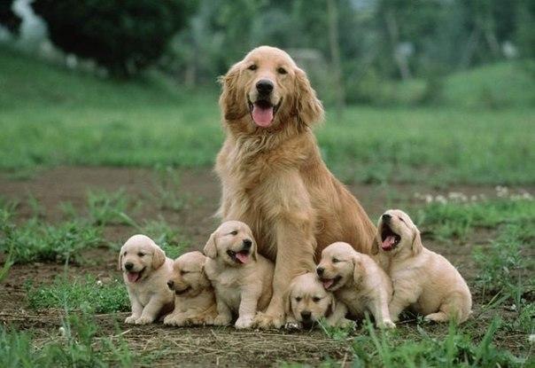 Счастливая мама.
