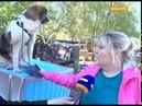 О жизни собачьей - забери собаку из приюта!